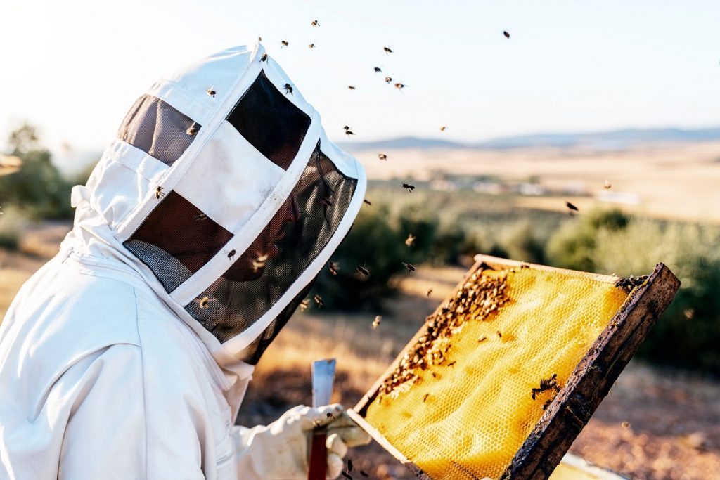 Beekeeper in the field